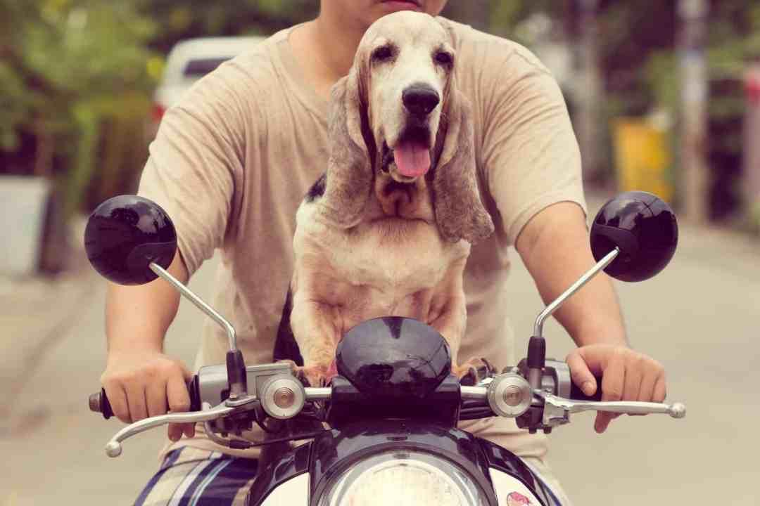 Esse cachorro também é um dos mais famosos do mundo