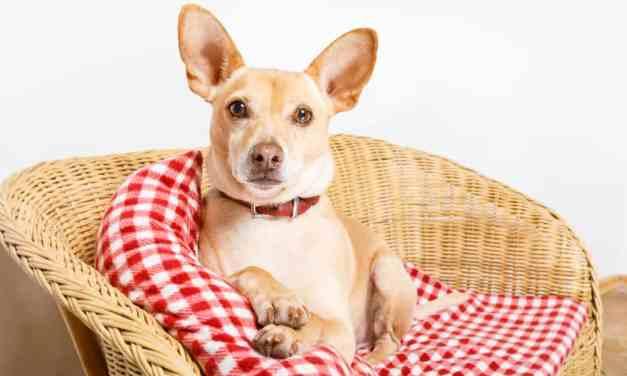 Giárdia em cães: o que é, sintomas e tratamento