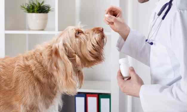Remédio de verme para cachorro: como e quando dar