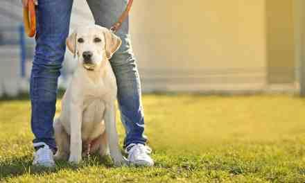 Dog walker: quando contratar um passeador de cães