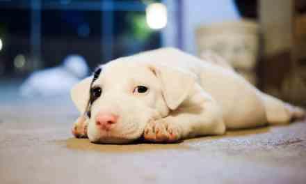 Epilepsia canina: o que é, sintomas e tratamento