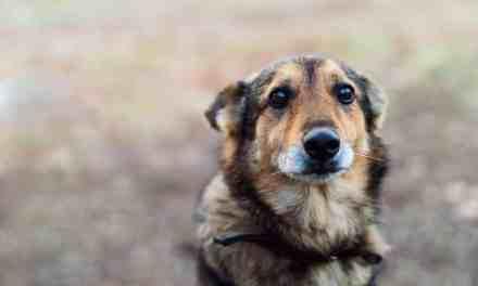 Cachorro tremendo: o que fazer?