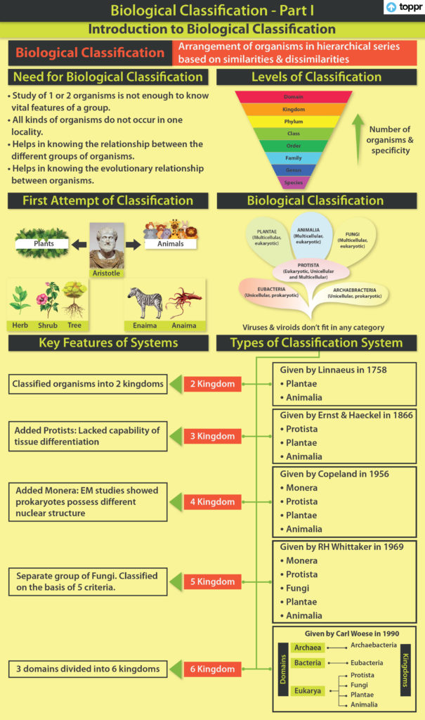 Kingdom Plantea : kingdom, plantea, Kingdom, Plantae:, Explanation,, Classification,, Concepts,, Videos,, Examples