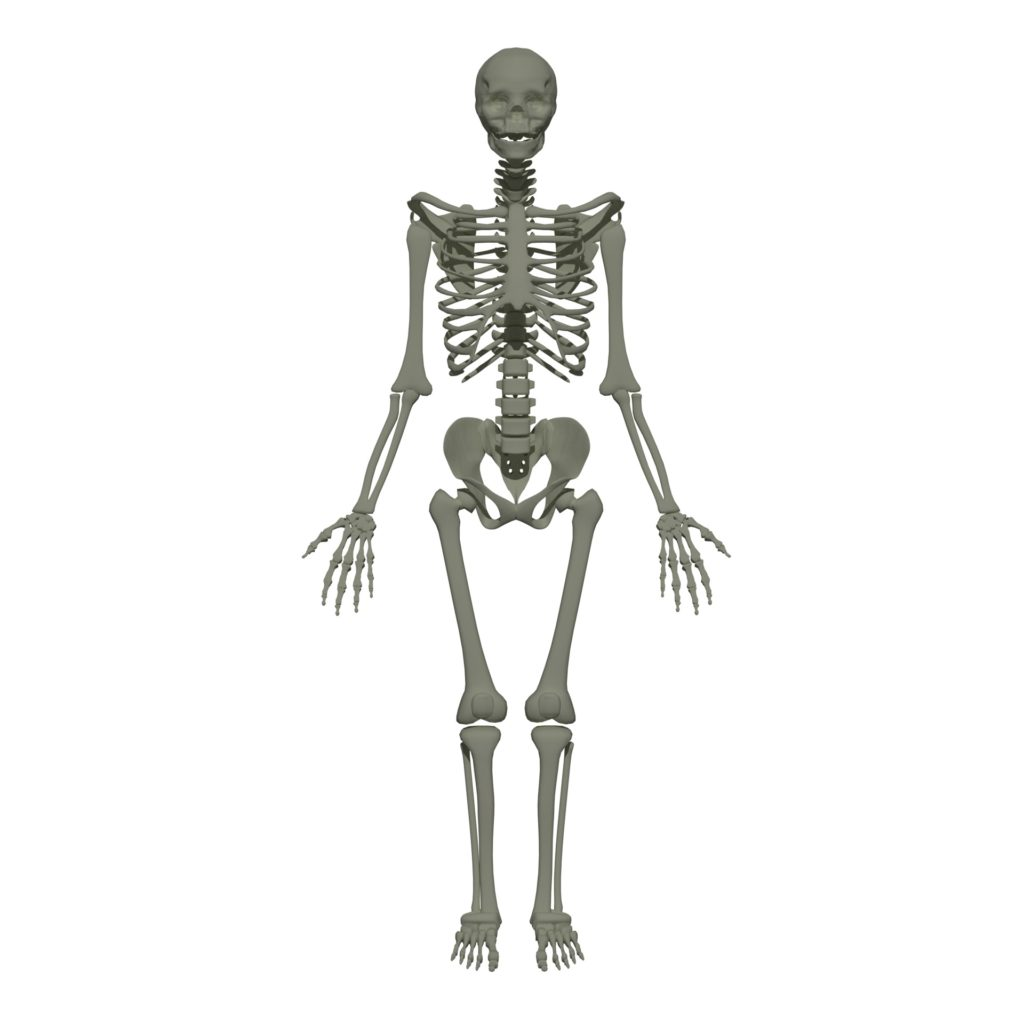 Bones In Human Body Types Of Skeleton And Bones