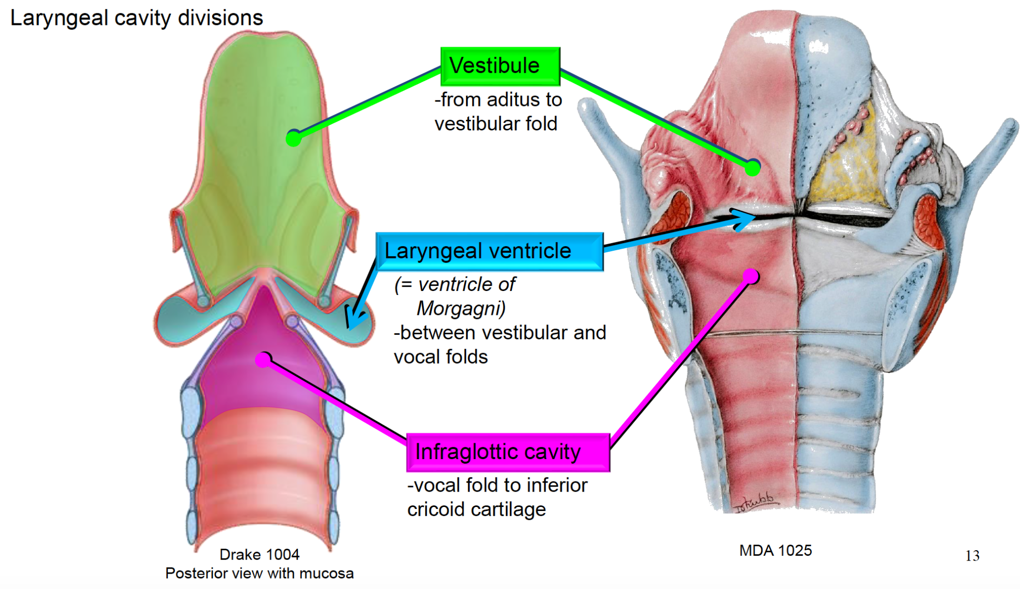 hight resolution of  infraglottic cavity vocal fold to inferior cricoid cartilage