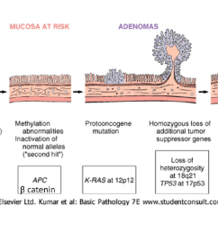 majority of colorectal carcinoma chromosomal truncation mutation apc colon mucosa mutation [ 1232 x 676 Pixel ]