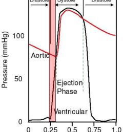 isovolumic contraction [ 936 x 1175 Pixel ]