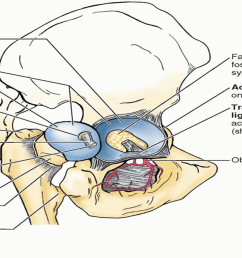 joint capsule diagram [ 1472 x 856 Pixel ]