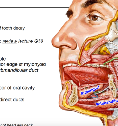 where is the submandibular gland and where does it empty  [ 2230 x 1216 Pixel ]
