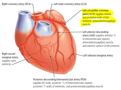 small resolution of heart diagram rca