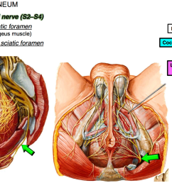 state the path of the pudendal nerve to enter the perineum [ 2002 x 1094 Pixel ]