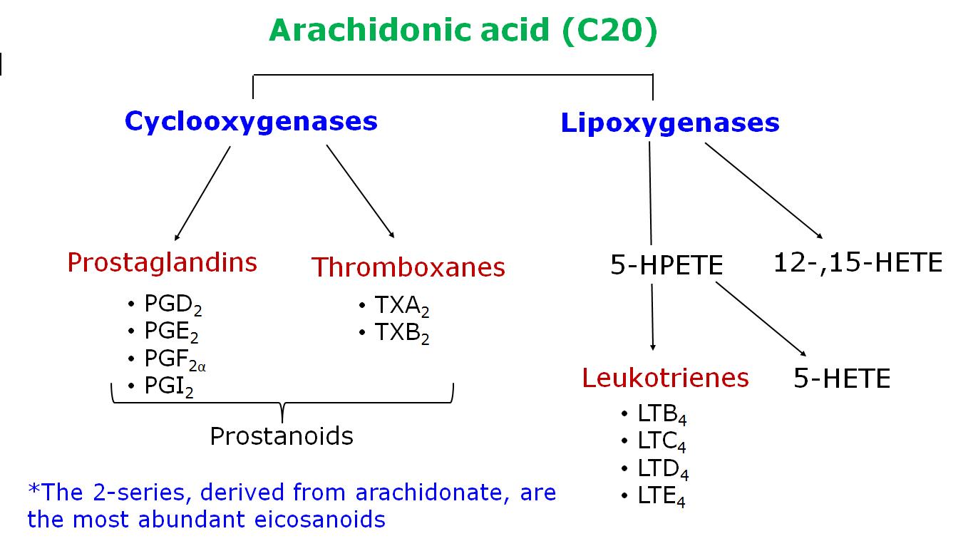 023 - Eicosanoids (Biochemistry) Flashcards | Memorang