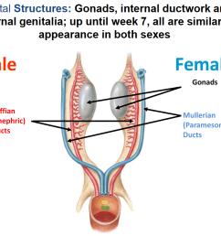 female genital structures [ 1090 x 892 Pixel ]