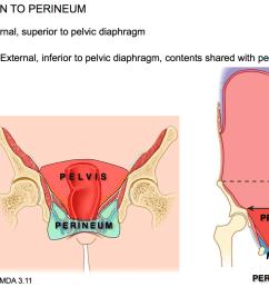 perineum diagram [ 1566 x 1106 Pixel ]