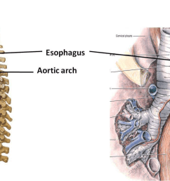 esophagus fibromascular tube that extends from the pharynx to stomach flattened anteroposteriorly lies posterior to the trachea [ 1390 x 769 Pixel ]