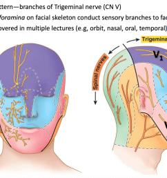 anatomy g58 face scalp parotid region flashcards memorang [ 1558 x 1116 Pixel ]