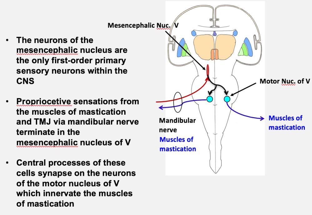medium resolution of pathway ans