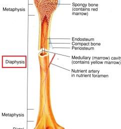 the skeletal system bone structure mcat 2018 biology flashcards memorang [ 965 x 1293 Pixel ]