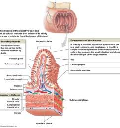 colon mucosa diagram wiring diagrams simple nasal diagram diagram of mucosa wiring diagram blog goblet cells [ 1085 x 1080 Pixel ]