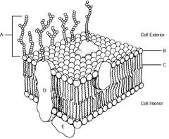 Biology 2120 Quiz 1: Cell Biology 2 (biology cell