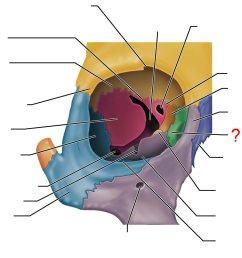 lacrimal bone [ 1402 x 969 Pixel ]