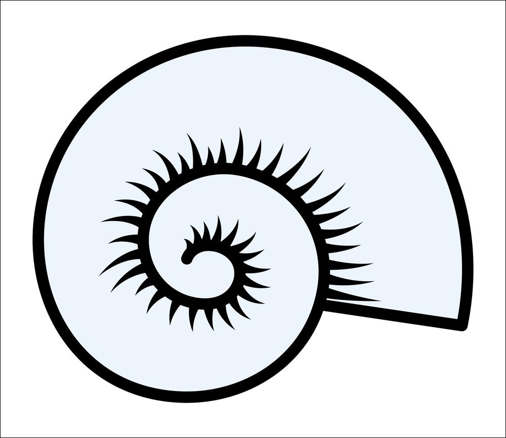 circular seashell vector illustration
