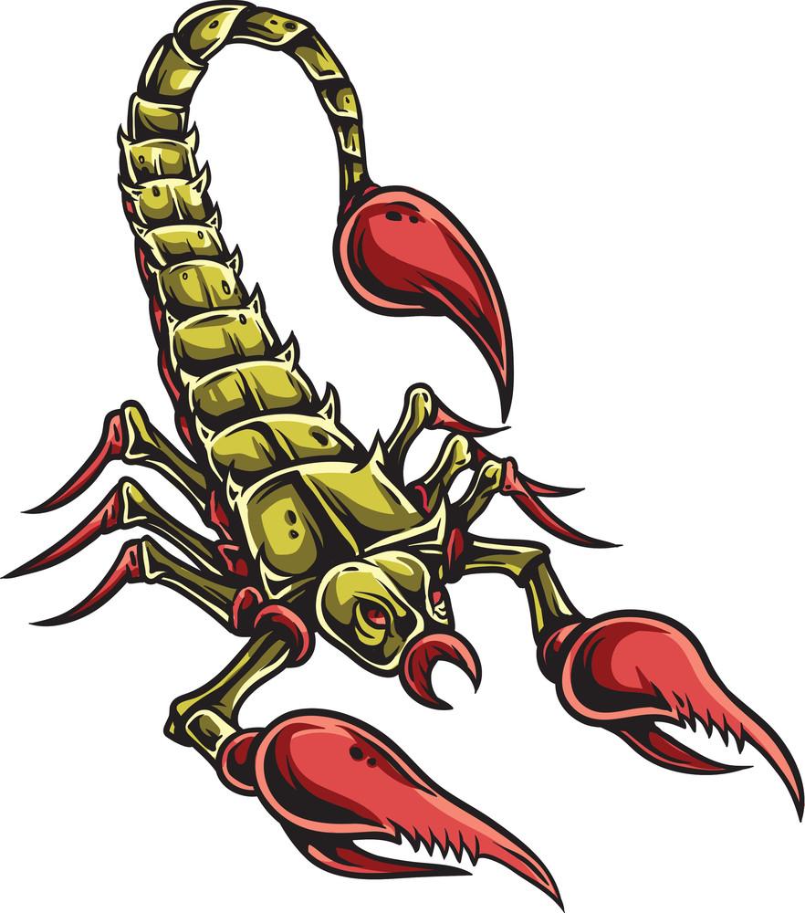 hight resolution of scorpion vector element