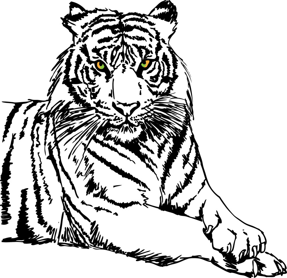 Sketch Of White Tiger. Vector Illustration Royalty-Free