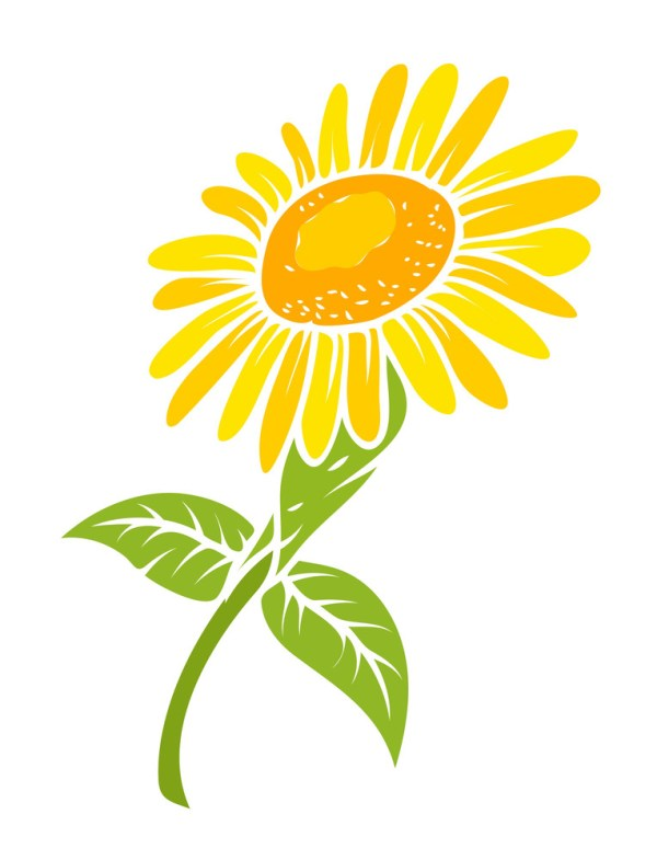 sunflower vector design royalty-free