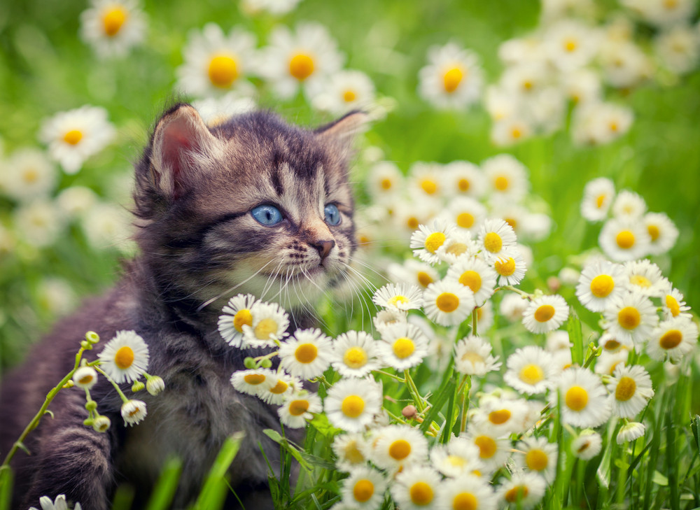 Cute Wallpapers With 0424 On It Portrait Of Cute Little Kitten Outdoors In Flowers Royalty