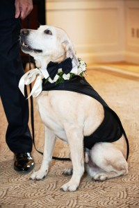 Flower Girls & Ring Bearers Photos - Dog Ring Bearer with ...