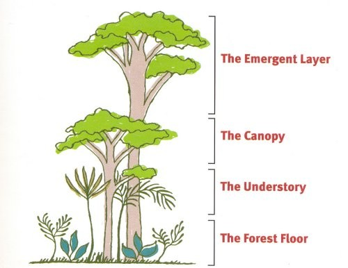 amazon rainforest layers diagram apexi avcr wiring smore newsletters interactive for 3rd grade