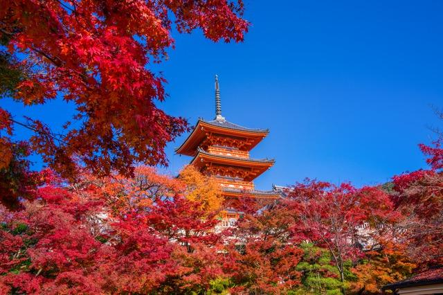 Wallpaper Full Color Hd Ten Gorgeous Pictures Of Japanese Autumn Foliage In Japan