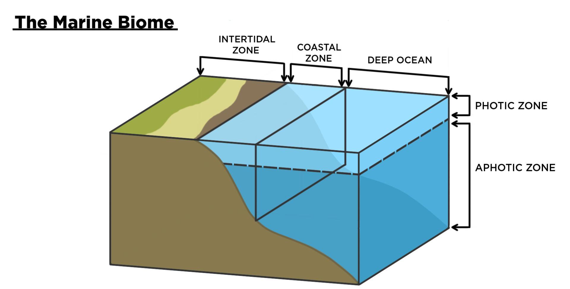 Aquatic Biomes Marine Amp Freshwater