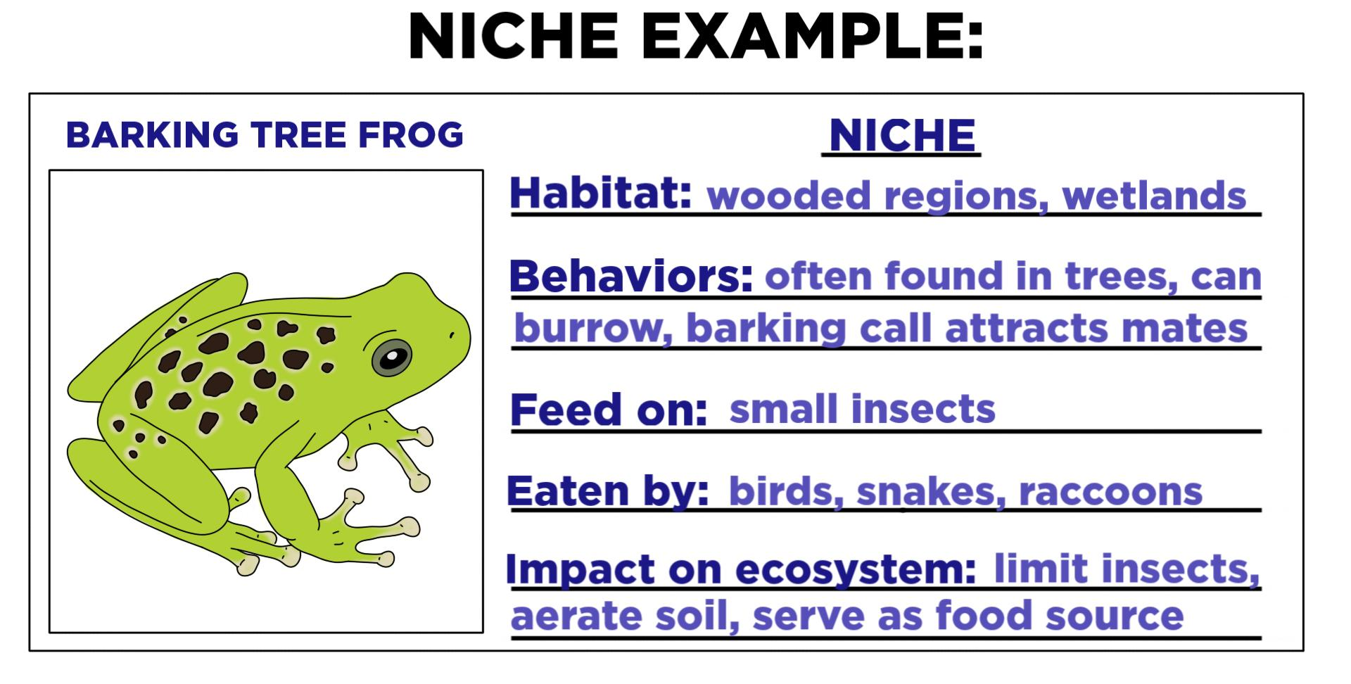 Niche Ecology Definition Amp Examples