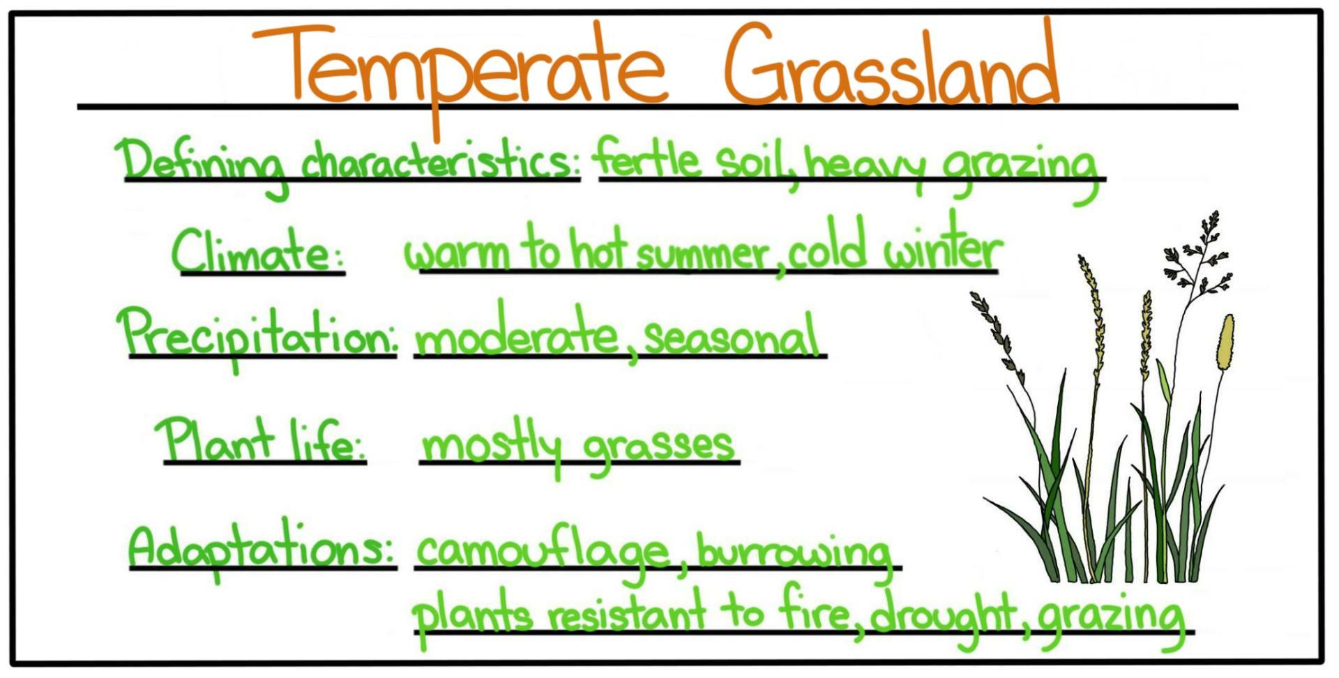 Biomes Temperate