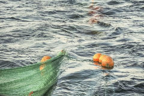 Torskfiske