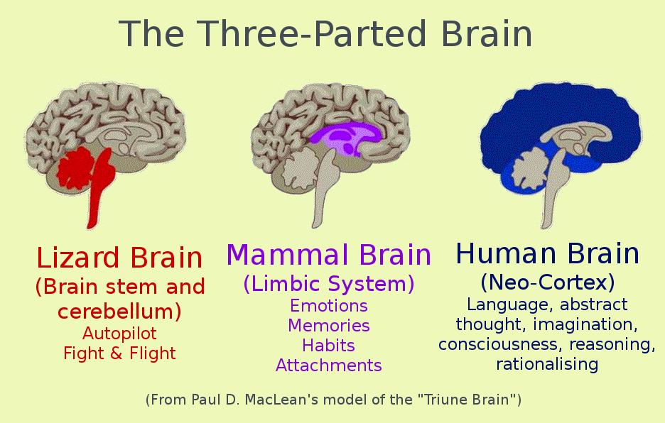 triune-brain - Quillette
