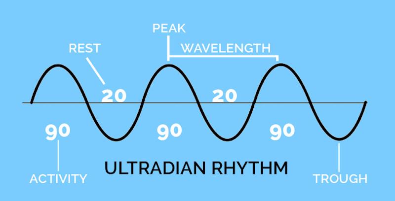 Jam Kerja | Ultradian Rhythm