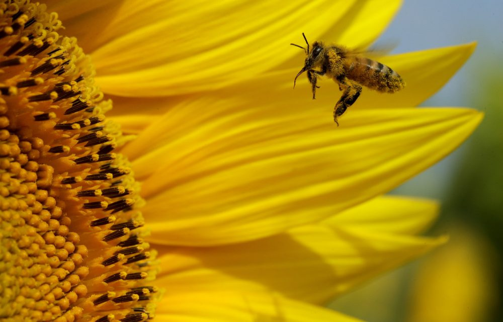 Old Car Wallpaper Download Why Bees Matter Changing Our Perspective About Honey Bees