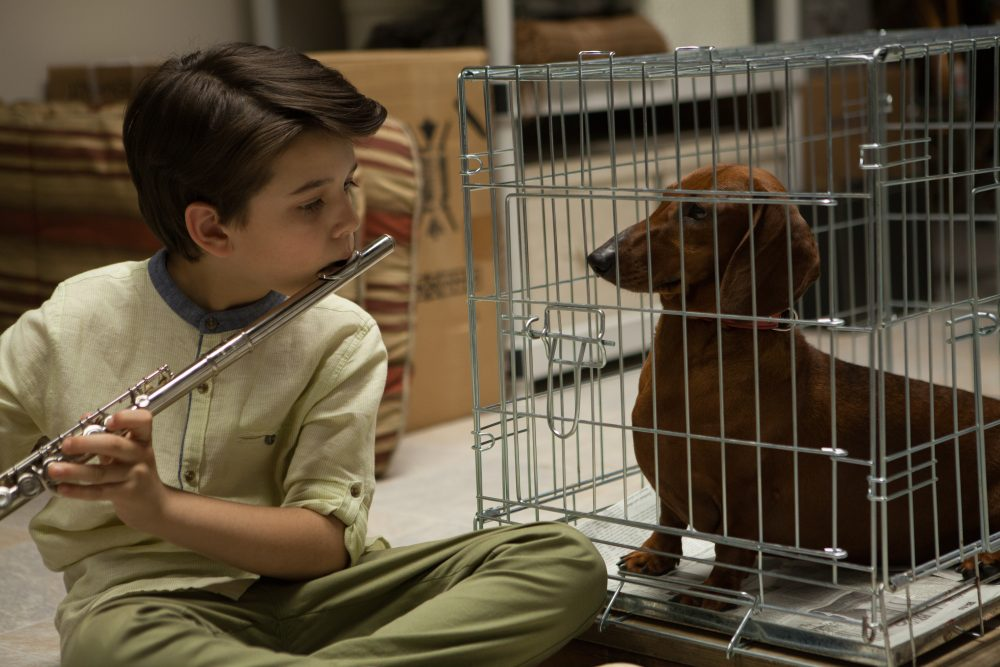"A still from Todd Solondz's latest film ""Wiener-Dog."" (Courtesy IFC Films)"