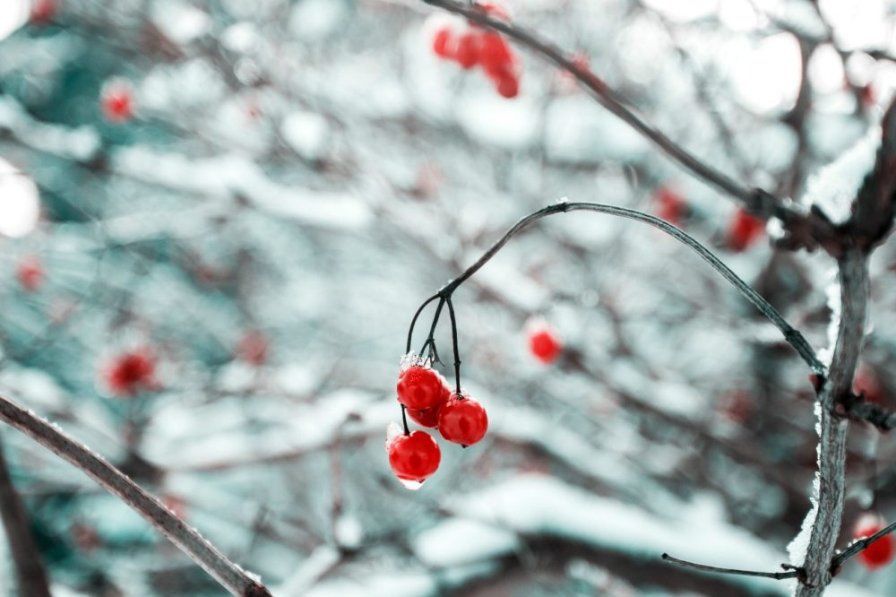 Pausing This Holiday Season To Savor The Gift Of Life   Cognoscenti