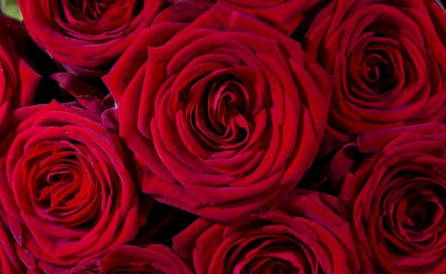 Where Valentine S Day Flowers Are Grown And How To Find
