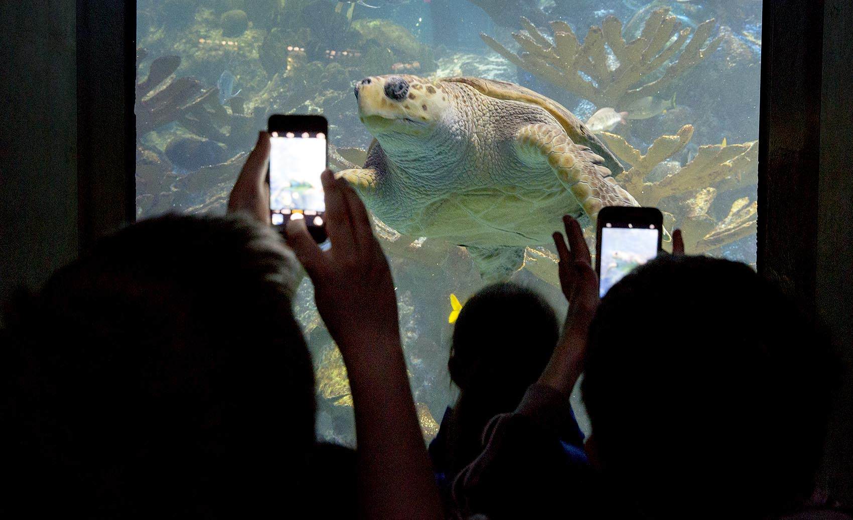 How The New England Aquarium Seeks To Urge Visitors To Act