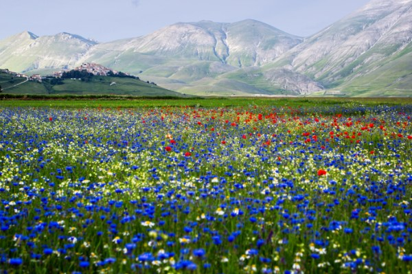 flower valleys in india &