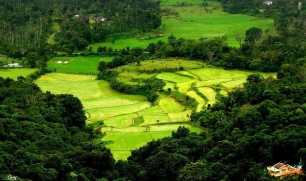 Image result for Coorg, Karnataka + hill station