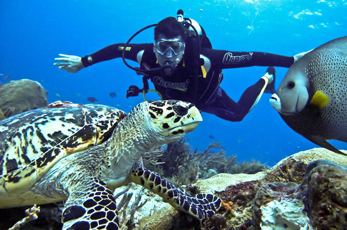 Image result for netrani island scuba diving cost