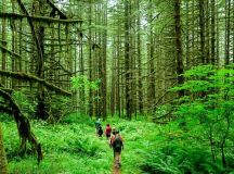 Visit Incredible Rain Forests In India For An Epic Adventure