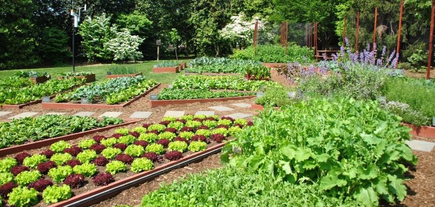 Kitchen Garden Ideas In India To Make Your Kitchen Garden Greener