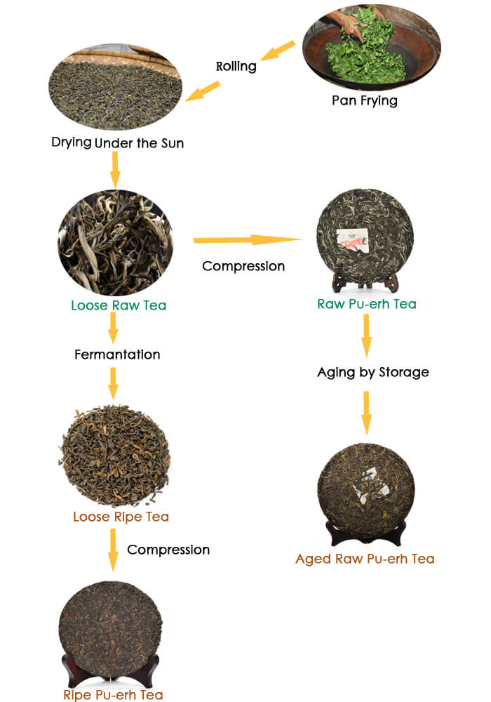 Understanding the Difference between Raw Pu-erh Tea and ...